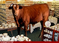 bull in a china shop HBR